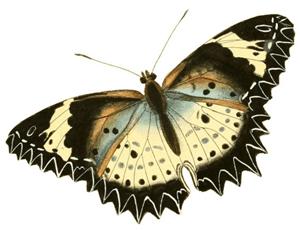 butterfly2-3