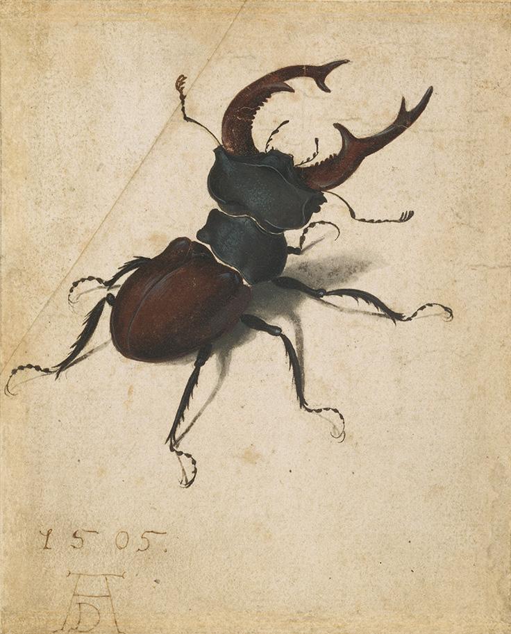 durer-stag-beetle-g