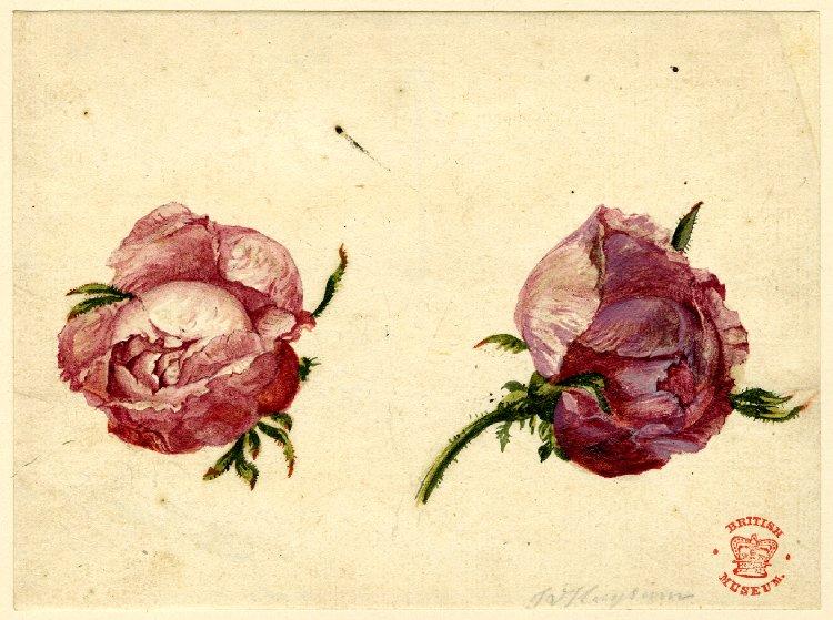 valentine-buds