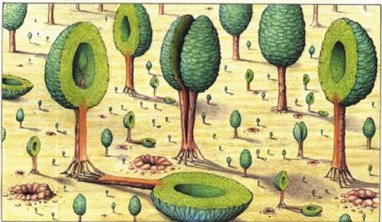 Luigi-_Serafini_Codex_Seraphinianus_6_ir