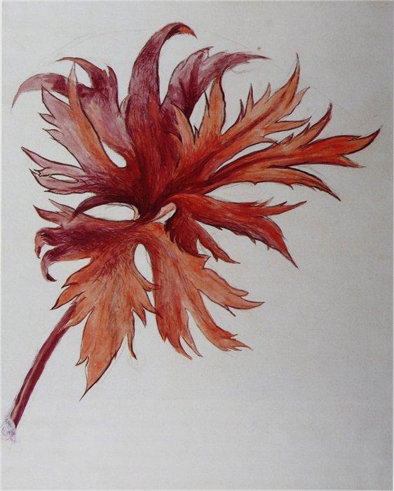 ruskin leaf