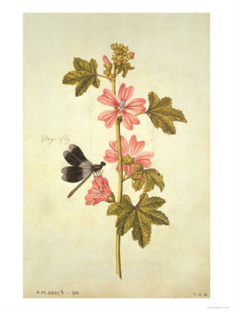 jacques-le-moyne-de-morgues-botanical-study-of-mallow-and-flagfly
