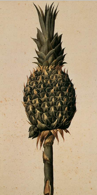 pineapple-ligozzi